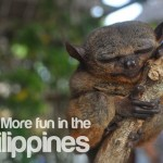 Tarsier… as Yoda